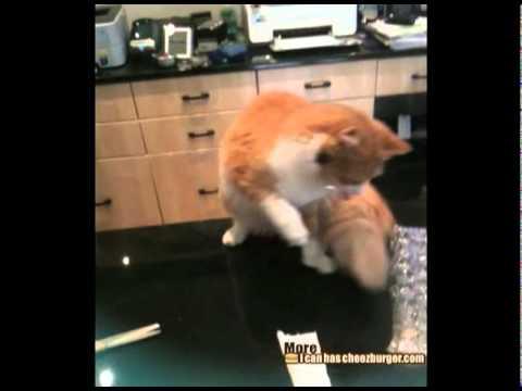 子供をガブリと食べようとするライオン