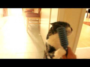 ママンの失敗。子猫を口に銜えたままジャンプしようとした母ネコさんが・・・。