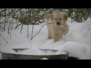 小型犬を番犬にする装置