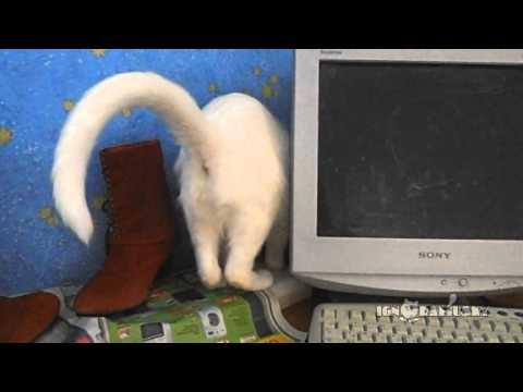 洗濯物をキャッチしてくれるネコが便利すぎワロタ