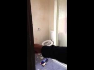 ネコとオウムのエサ取り合戦。ネコパンが強烈すぎてオウムさんがかわいそう・・・