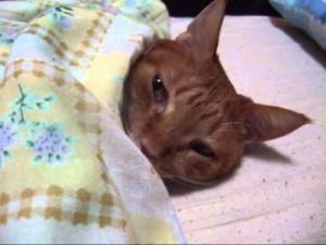 寝てるワンコを驚かせてみた