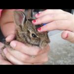 子ウサギを野生に返そう。元気に走っていく姿を見送っていたら(´・ω`・)エッ?