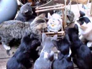 沢山の子ネコをお風呂に入れてみた