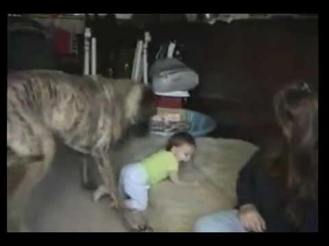 火事現場から2匹の犬を救出!一方日本では・・・