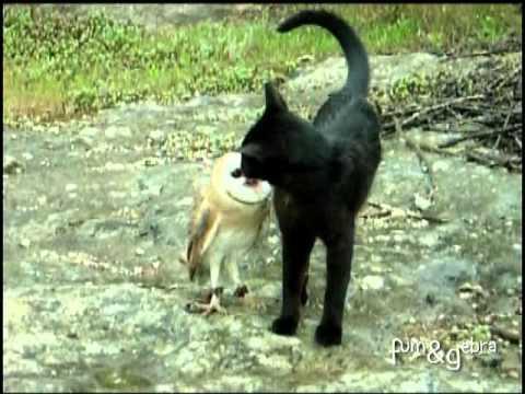 ネコに気取られないようにして脅かしてみた
