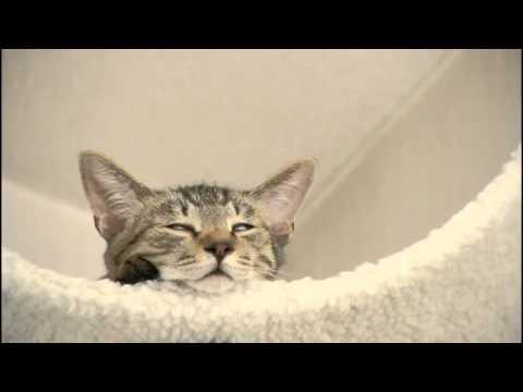 夕暮れの お座り猫ちゃん