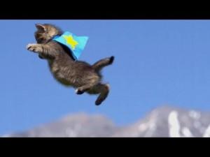ワンコをローリング攻撃するネコ