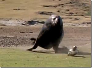 ジュラシックパークかよwww野生のキリンに追いかけられた人たちのビデオ。