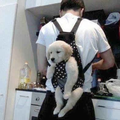 料理中に騒ぐとこうなる。