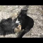 異種格闘技戦。ネコがワンコにスリーパーホールド!?