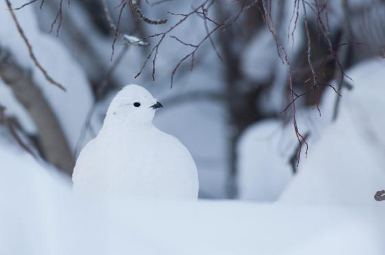 snow_animal_2