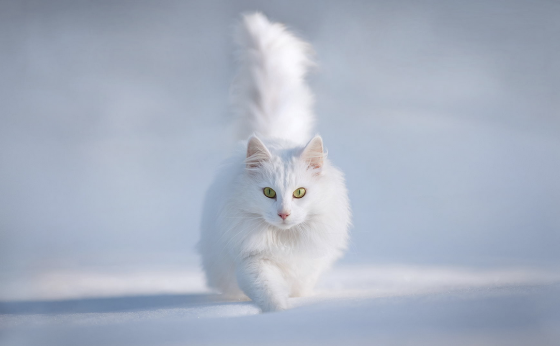 snow_animal_3