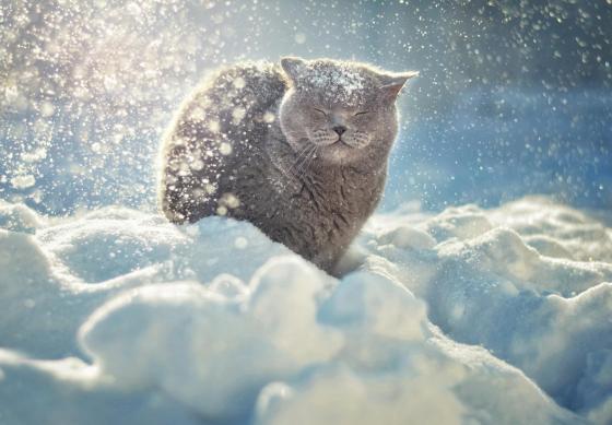snow_animal_4