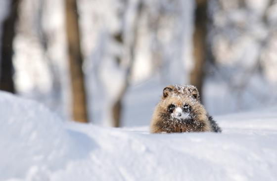 snow_animal_7
