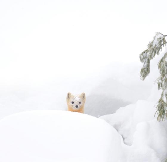 snow_animal_8