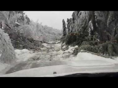 雪ではしゃぐパンダが撮影される