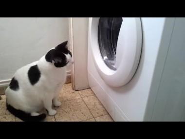 子ネコ「何が起こった!?」 慌てる子ネコがカワ(・∀・)イイ!!
