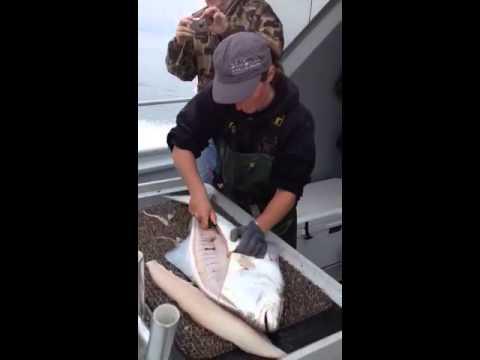 ナイフで魚を素早くおろしてみた