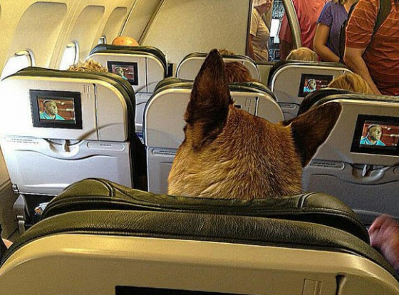 airplane_strange