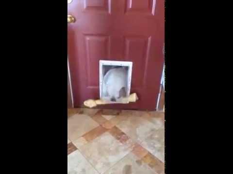 「コレは何にゃ!?」…クアッドコプターに興味津々の猫さん