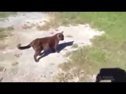 8匹の子犬にもみくちゃマッサージされる猫さん