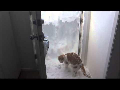 雪をぶっ飛ばして走る貨物列車がカッコ(・∀・)イイ!!