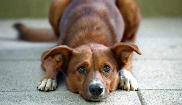 犬と飼い主のおじいさんの強い絆を描いたCMが「感動的だ!」と話題に