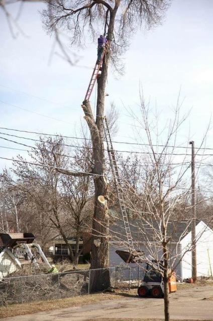 これが植木職人の仕事だ