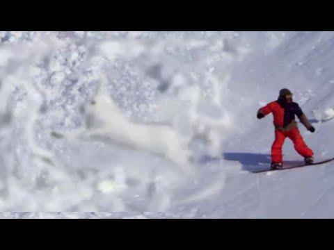逃げて~~~!!雪崩に巻き込まれるウサギさんが、もの凄く頑張っている件