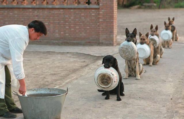 中国の警察犬は中国人よりも優れているらしい
