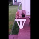 テーブルにちょこんと座るネコがカワイイ!
