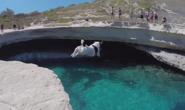 度胸あるなぁ。人間に交じって、小さなわんちゃんが何度も崖からダイビング!