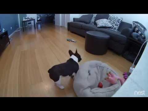 GoProでキリンを撮ってたら奇跡的に凄いアングルになった!
