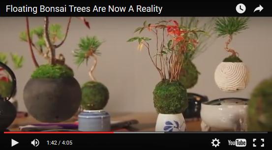 この発想はなかった。盆栽が空中に浮かんで回る。エアー盆栽が海外で話題に