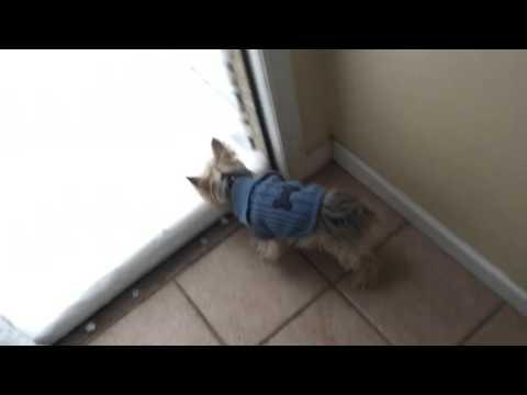 ♬雪 「犬は喜び 庭かけまわり~」は、ガセ