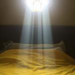 ネコが窓から入る光を全身に浴びて『選ばれしもの』みたいになってたwwww