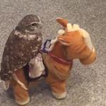 動く馬のおもちゃに乗るフクロウが超絶かわいいw