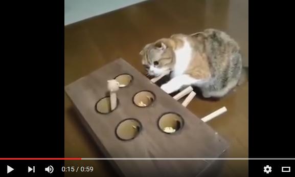 ニャンだこれは!? 謎の手作りおもちゃにはまる猫の様子が可愛い