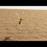 高速バク転で移動する蜘蛛