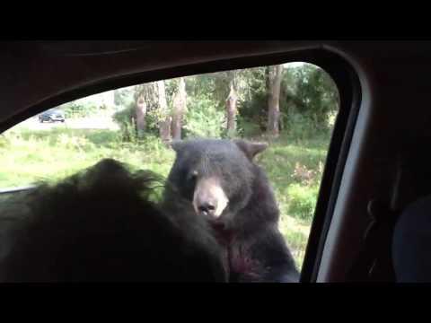 車の中の家族「クマ、かわいいねぇ~」 → 「キャー」 の理由
