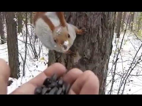 ひまわりのタネを持っているだけでいろんな動物たちと友達になれる森