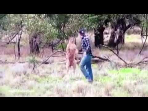 カンガルーにヘッドロックされるワンコを人間がワンパンで救出!