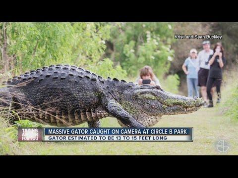 まるで恐竜だとニュースになった巨大ワニがデカすぎ!