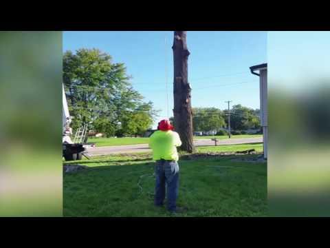 落ちてくる枝を安全に下ろすお仕事です
