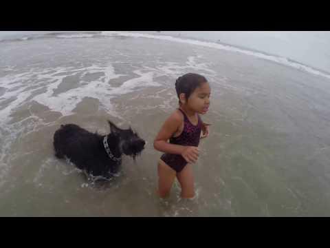 海で遊ぶ子供をガードするワンコ