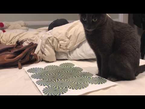 錯視はネコにも効くことが判明w