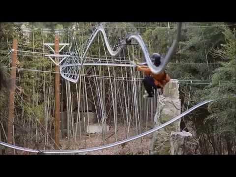 森の中を疾走するジェットコースター・ジップライン