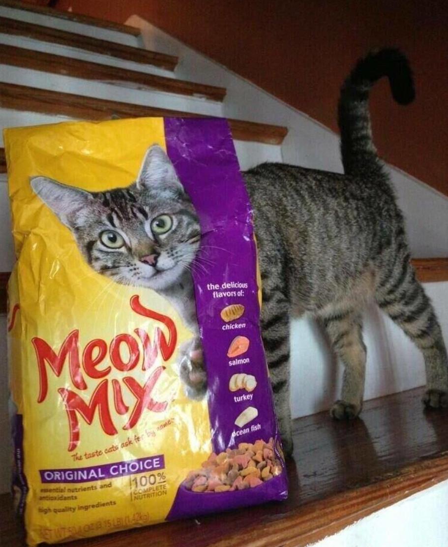 ネコまっしぐら