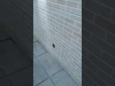 何で壁に犬のウ💩コが??